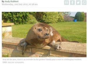 やけに人懐っこいアザラシ(画像は『LincolnshireWorld 2021年7月21日付「'Hello? Police? There's a seal on my patio': Billinghay resident explains bizarre morning call to Lincolnshire cop」』のスクリーンショット)