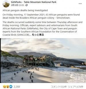 南アフリカのビーチでペンギンが大量死(画像は『SANParks - Table Mountain National Park 2021年9月18日付Facebook「African penguin deaths being investigated」』のスクリーンショット)
