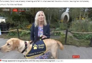 盲導犬と一緒に生中継をした気象キャスター(画像は『MyLondon 2021年9月20日付「BBC Breakfast's Carol Kirkwood dragged to floor by excited dog live on air」(Image: BBC)』のスクリーンショット)