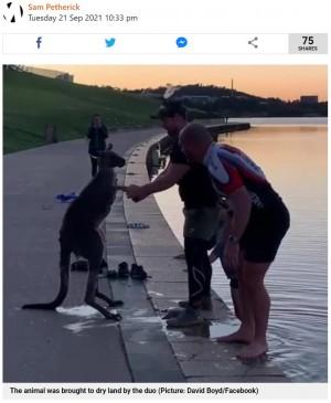 カンガルーと救助した男性たち(画像は『Metro 2021年9月21日付「Kangaroo shakes rescuer's hand after being rescued from freezing lake」(Picture: David Boyd/Facebook)』のスクリーンショット)