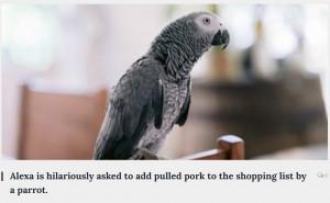 5歳児並みの知能があると言われるヨウム(画像は『The Washington Newsday 2021年9月19日付「Alexa is hilariously asked to add pulled pork to the shopping list by a parrot.」』のスクリーンショット)