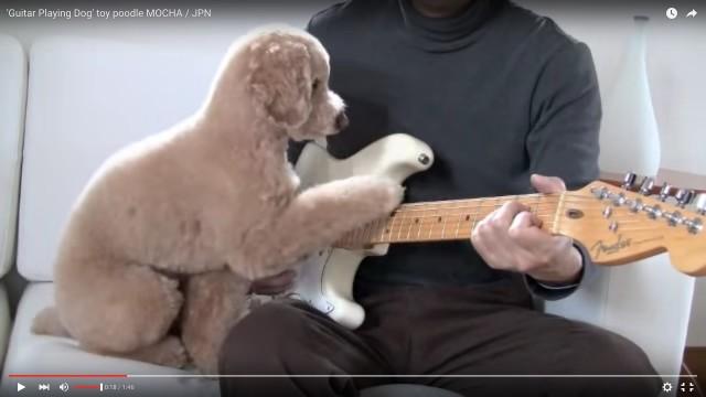 お父さんとギター弾くトイプー