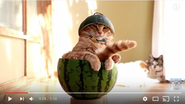 スイカの中に鎮座している猫