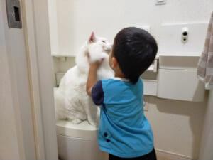 猫にとっても特等席? トイレをめぐる猫と子どもの攻防戦