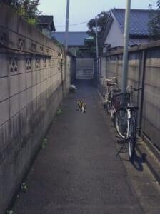 路地裏の写真が完全に「ホラーゲームの導入」 猫についていくと危険?