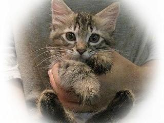 東京都豊島区で、145匹の可愛い猫たちが新しい家族を探してます